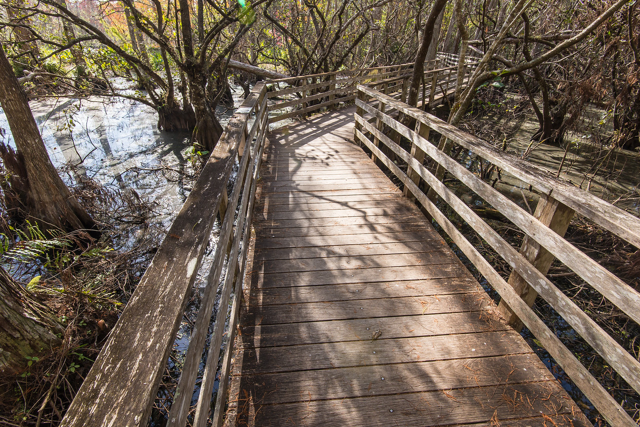 Boardwalk in Corkscrew Swamp Sanctuary, FL - January 2018