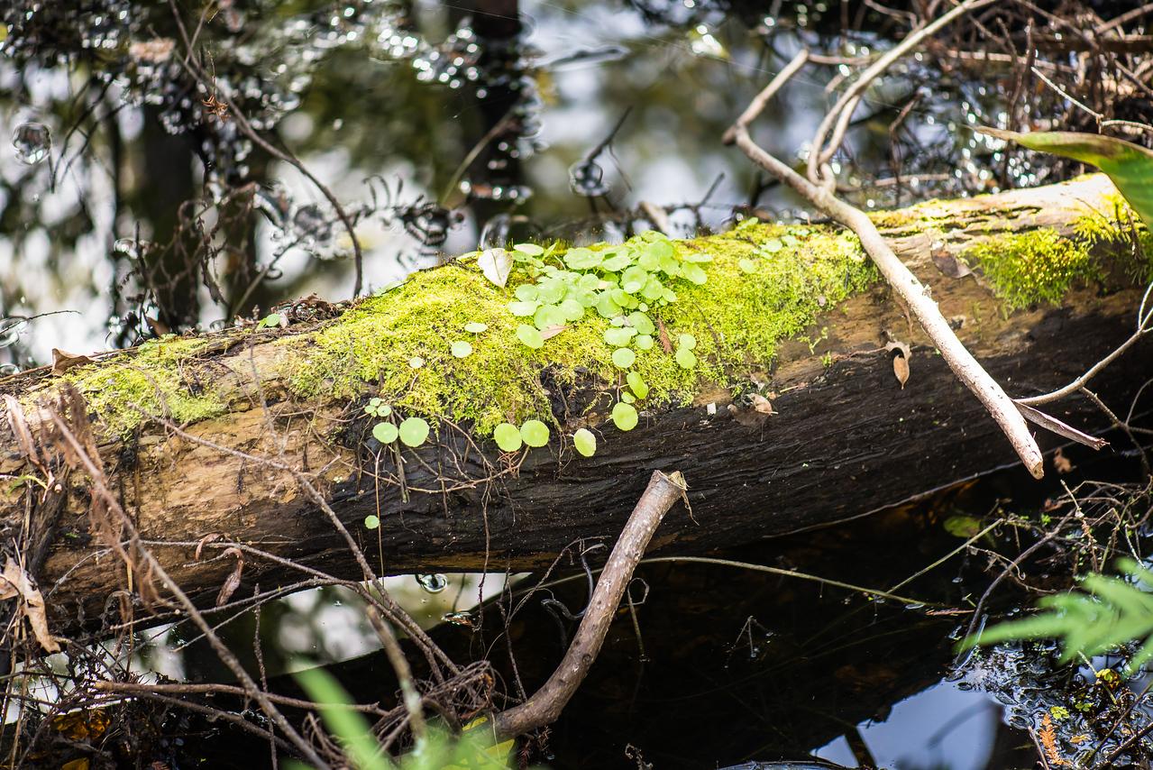 Corkscrew Swamp Sanctuary, FL - January 2018