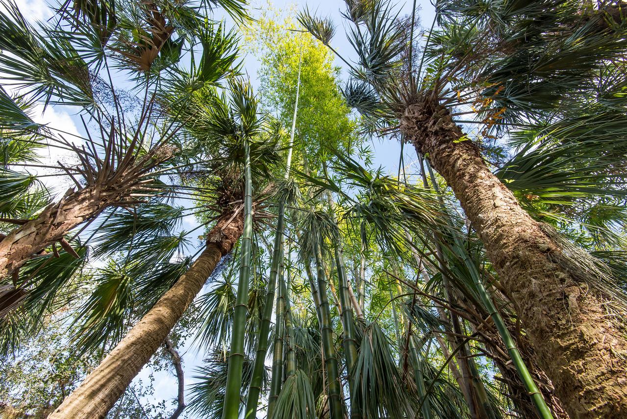 Bamboos & Palms at Koreshan State Historic Site, FL - January 2018