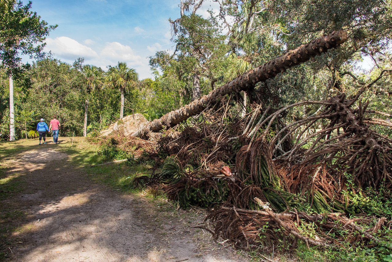 Hurricane Irma damage at Koreshan State Historic Site, FL - January 2018