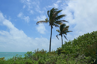 Sea & Sky ~ The Florida seas were a beautiful turquoise, with white sand beaches. These were coconut palms along the beach.