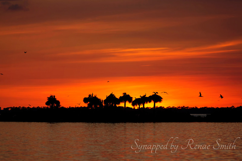 Sunset's Roost