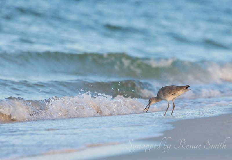 Catcher in the Sea