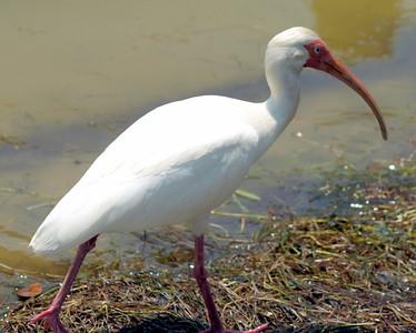 Florida Birds 2011