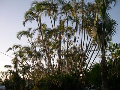 Florida (Dec 2005)