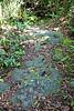 Bedrock - Gumbo Limbo Trail