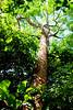 Gumbo Limbo - Gumbo Limbo Trail