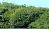 Roseate Spoonbill at Paurotis Pond