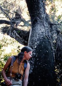 rita+tree-t0160