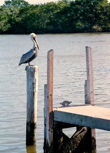 pelican+dock-t0145