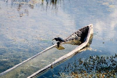 dugout+bird-t0150