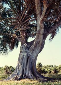 tree-n-tree-t0156