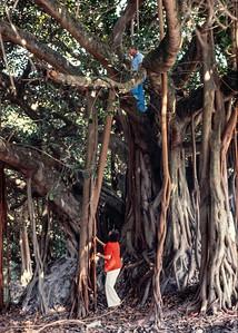 lela+floyd+fig_tree-t0166