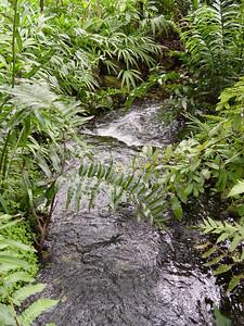 In the Richard H. Simons Rainforest
