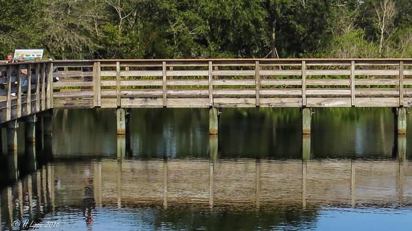 2016-02-11 Florida Wakodohachee-3777