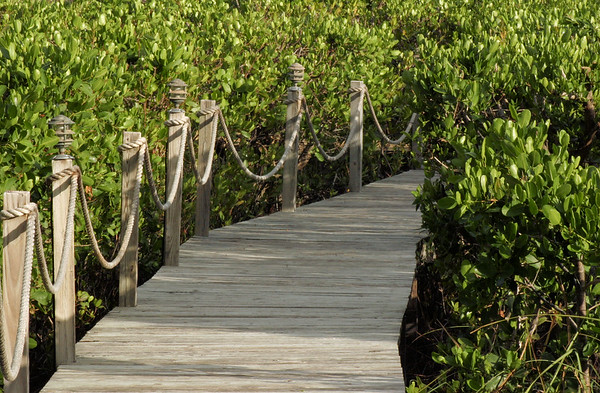 Boardwalk to harbor in Loblolly Bay.