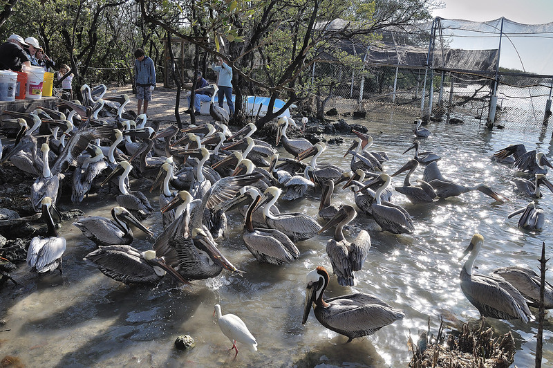 Feeding time at the Keys Wild Bird Center