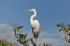 The Keys Wild Bird Center on Key Largo