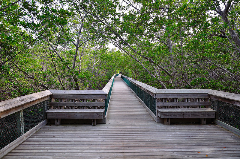 We returned to Long Key State Park several times because the boardwalks and trails provided access to many shorebird environments.