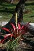 <b>Bromeliad</b>