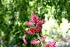 Bromeliad Flower Bract