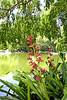 Bromeliad with Flower Bract