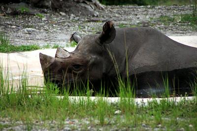 Zoo Miami / May 20, 2013