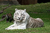 White Tiger, Carlita