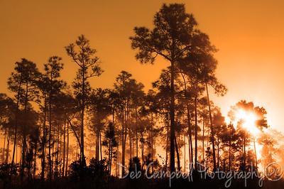 Early Morning Everglades National Park Florida