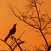 Sunrise/Fish Crow Everglades National Park Florida