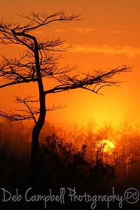Foggy Sunrise Everglades National Park Florida