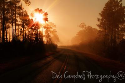 Early morning drive in Everglades National Park Florida