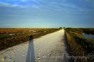 Bio-Lab Road with my shadow Merritt Island Wildlife Refuge Titusville, Florida