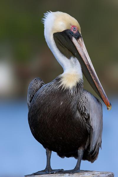 pelican 40D   400DO<br /> <br /> 400mm
