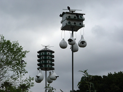 Purple Martin Condos on the Grounds of Epcot