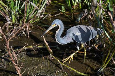Florida Wildlife Sanctuary