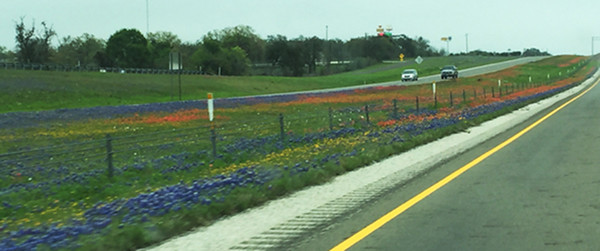 The Hill Country wildflowers started blooming early this spring and were showing great promise for an abundant year.   I was happy to get in a couple of shooting days before leaving the end of March to meet my siblings in Florida.  This (taken from the car) was the median of I-10 just west of Comfort, TX.  Great color variety!  March, 2016