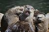 Otter choir, Homosassa Springs Wildlife State Park