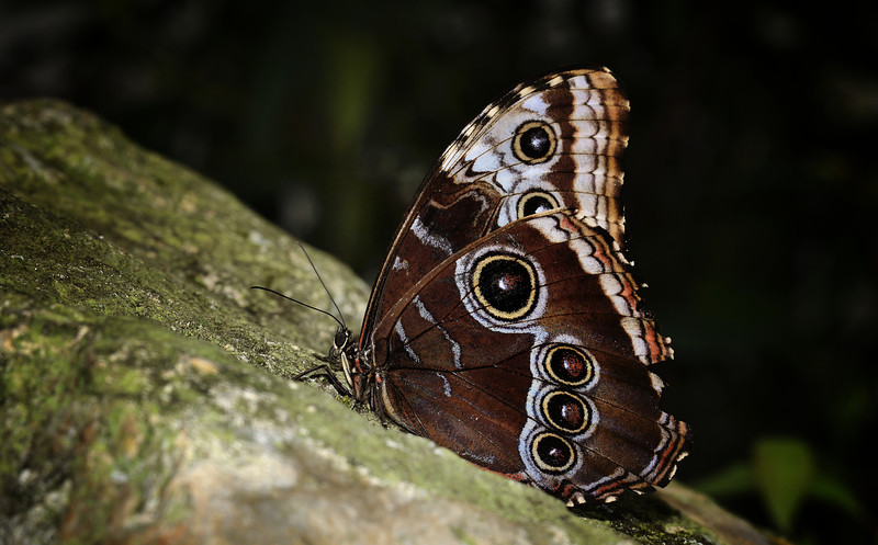 Butterfly House, Gainesville, Nikon D800E w/Nikon AF Micro Nikkor 70-180mm 4.5-5.6 D