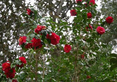 azaleas Eden Gardens State Park