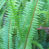 Ferns - Ellel Ministries - English Acres USA - Lithia, FL