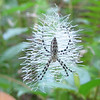 Closeup of Spider in Zigzag Web - Ellel Ministries - English Acres USA - Lithia, FL