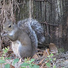 Squirrel - Ellel Ministries - English Acres USA - Lithia, FL
