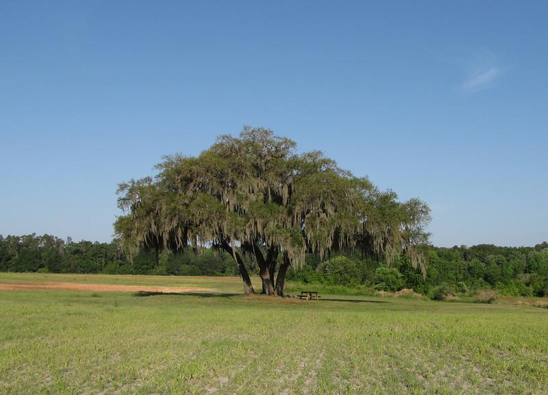 The Prayer Tree - Ellel Ministries - English Acres USA - Lithia, FL
