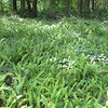 Clearing of Woodland Ferns - Ellel Ministries - English Acres USA - Lithia, FL
