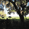 View of the Meadow from the Woods - Ellel Ministries - English Acres USA - Lithia, FL