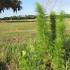 Meadow Area - Ellel Ministries - English Acres USA - Lithia, FL
