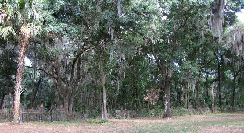 Old Florida Woods Habitat - Ellel Ministries - English Acres USA - Lithia, FL