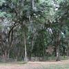Old Florida Woods Habitat - Ellel Ministries - English Acres USA - Lithia, FL