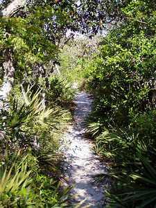 Hiking Trail - Grayton Beach State Park